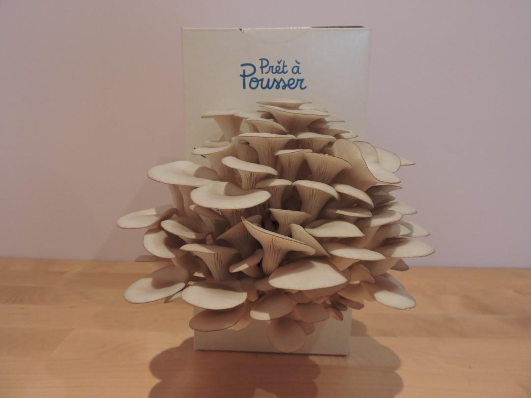 kit de champignons